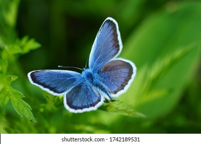 Blue butterfly in the green grass. Flower background.