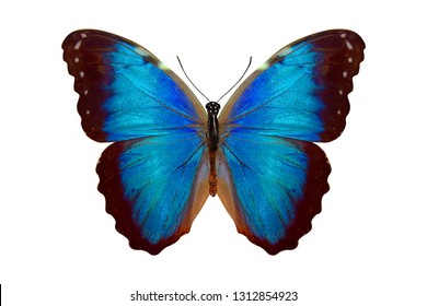 blue butterfly. isolated on white background