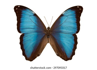 Blue butterfly isolated on a white background