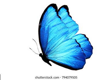blue butterfly flying images  stock photos   vectors shutterstock butterfly clipart black and white butterflies clip art pictures