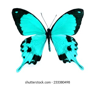 blue butterfly isolated, set of realistic tropical butterflies , zoology,wild ,entomology, beautiful wing collection ,insect animal stuff icon