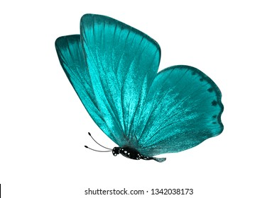 blue butterfly. natural insect. isolated on white background