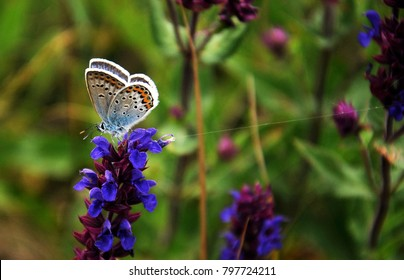 Blue butterfly on beautiful flower