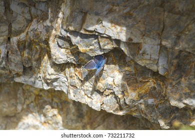 blue butterfly on the stone. Altay. Siberia