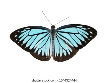 blue butterfly on top view isolated on white background with clipping path