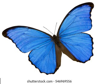 A blue butterfly on the white background