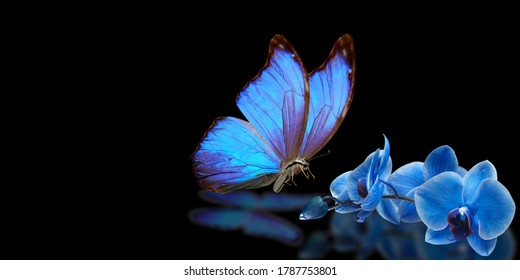 blue butterfly and blue orchid on black background