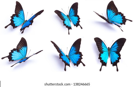 Blue butterfly, Papilio Ulysses, isolated on white background