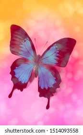 Blue butterfly (Papilio ulysses - Mountain Swallowtail ) on colorful bokeh background