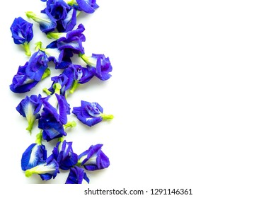 Blue butterfly pea flowers isolated on white background with copy space.
