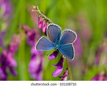 Blue butterfly resting on bloom