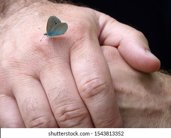 Blue butterfly resting on hands of an old man