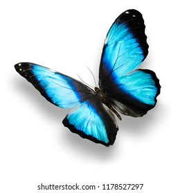 blue butterfly with shadow isolated on white background