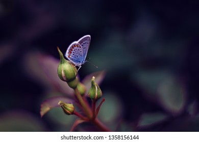 Blue butterfly sitting on flower bud on dark blurred nature background. Postcard concept. Soft focus.