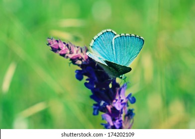 Blue butterfly sitting on meadow violet  flower