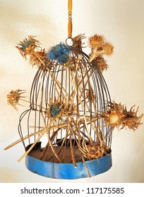 Blue cage for birds with some dried thistles