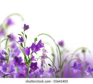 blue campanulas isolated over white