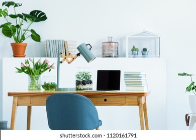 Blue chair at wooden desk with books, laptop and lamp in white interior with study area with flowers. Real photo