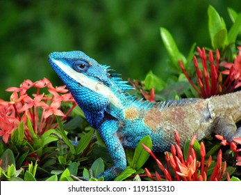 Blue Chameleon on spike