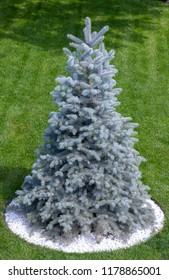 Blue Christmas tree on the green lawn near the cottage