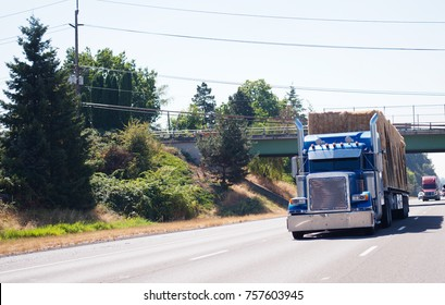 Blue classic American bonnet big rig semi truck with high chrome exhaust pipes transport flat bed semi trailer loaded with hay running on wide highway