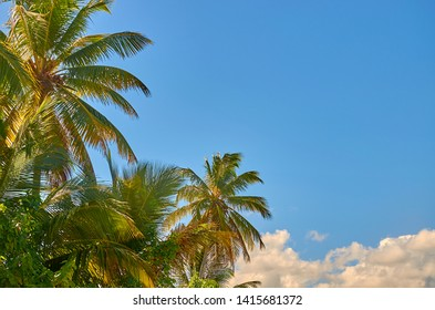Blue clear sky with coconut trees. Copy space of travel, relax, environment ecology concept.  Sammer holiday background.