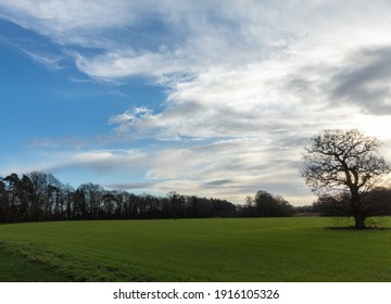 blue cloudy sky, a gentle walk in a park in England