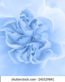 Blue clove macro