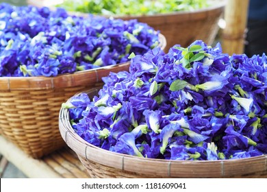 Blue color of anthocyanin in butterfly pea piles for sale in fresh market, natural acid and base indicator Clitoria ternatea L. , Rhizobium leguminosarum at root . Mendel genetic