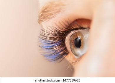 Blue color eyelash extensions. Trendy false lash style close-up, woman eye macro.