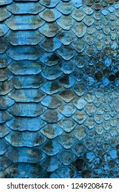 Blue Coloured Real Snake Skin Snakeskin Animal Print Background