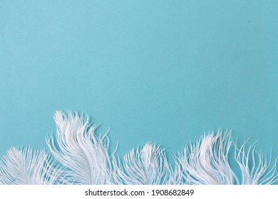 Blue copy space with white feathers, wide banner for text