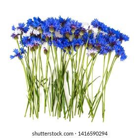 Blue Cornflower Herb isolated on white