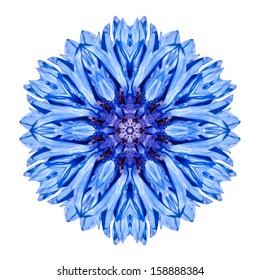 Blue Cornflower Mandala Flower. Kaleidoscope of Centaurea cyanus Isolated on White Background