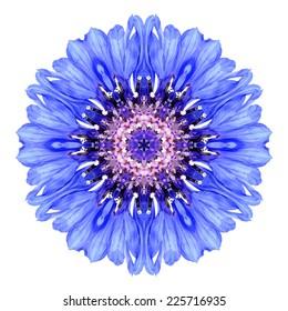 Blue Cornflower Mandala Flower. Kaleidoscope of Centaurea cyanus Isolated on White Background. Beautiful Natural Mirrored pattern