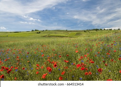 Blue cornflower and orange poppy in een grain field and in the background the vineyards of the Champagne district near Dormans in France.