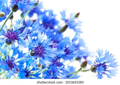 blue cornflowers bouquet, summer flowers on white background, floral background, beautiful small cornflowers close up