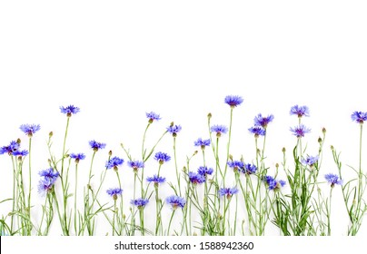 Blue cornflowers isolated on a white background. Top view.