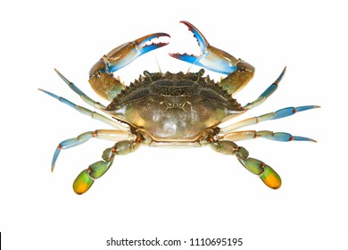 blue crab isolated on white background. Top view