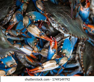 Blue crabs caught on the Gulf of Mexico