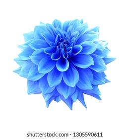 Blue dahlia flower isolated on white background