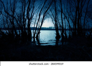 Blue dark forest with a view of magical lake