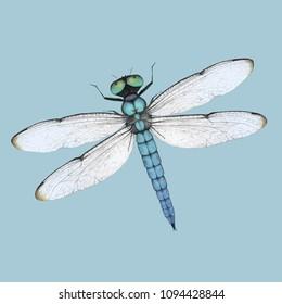 Blue dragonfly illustration