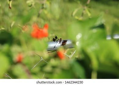 Blue Dragonfly in Summer Garden