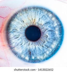 blue eye with amazing details inside