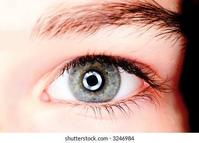 Blue eye shot in macro with ring flash