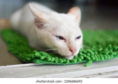 Blue eyed Cat  sleep on Green carpet.