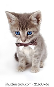 A blue eyed kitten with large ears and a bow tie.