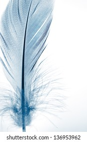 The blue feather close up.