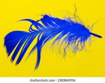 Blue feather isolated on yellow background .